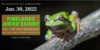 tree frog poster image
