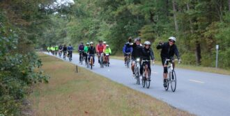 tour de pines in the forest